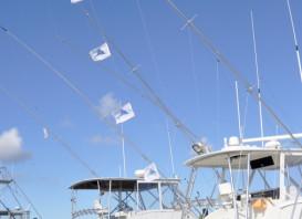 Pirates Cove Billfish Tournament